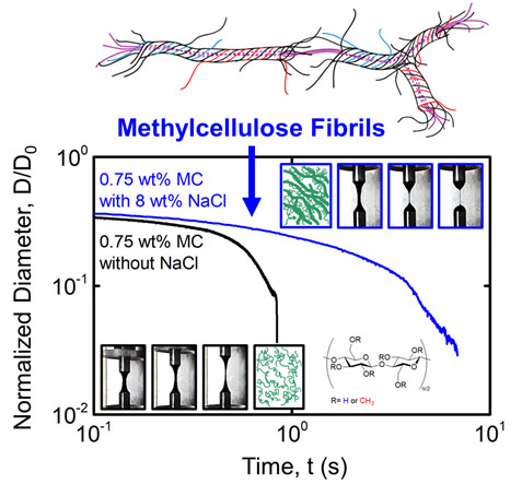 Extensional Flow Behavior of Methylcellulose Solutions Containing Fibrils