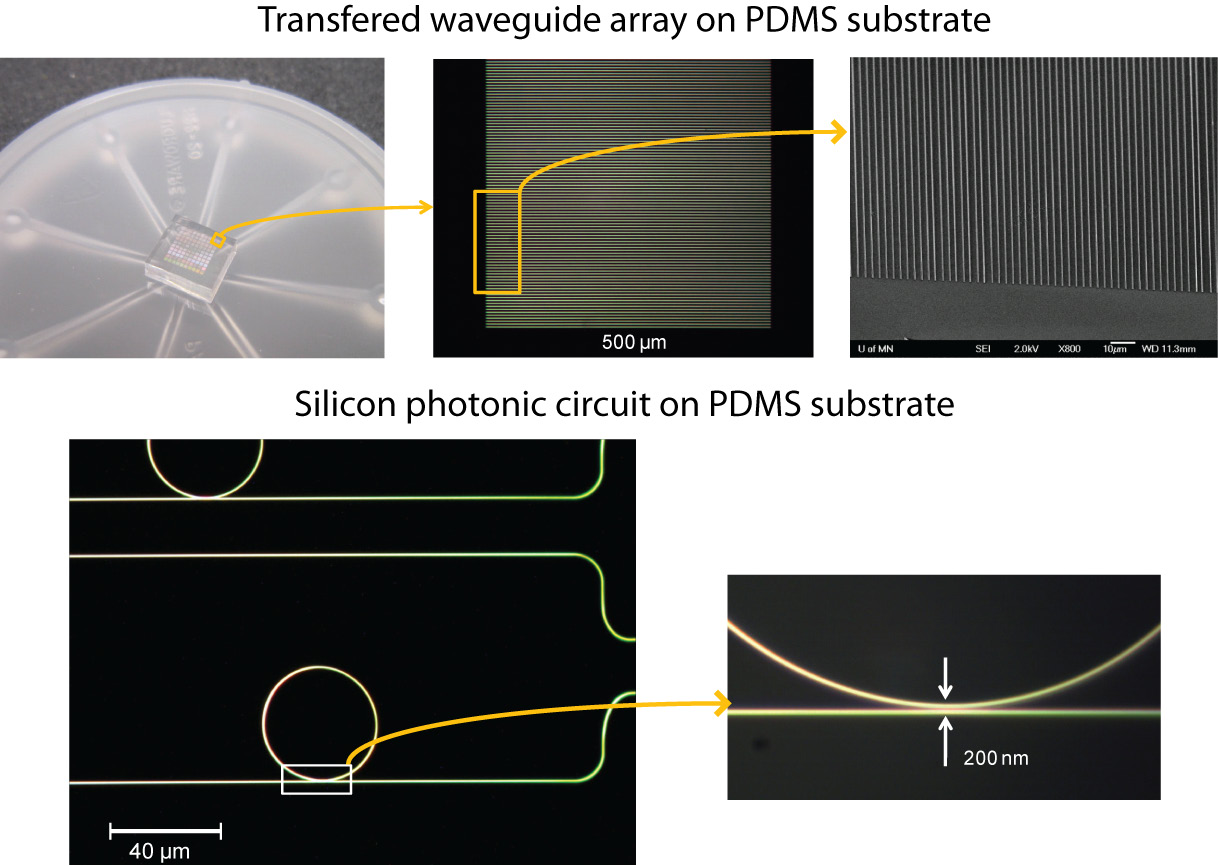 Optical and SEM images of silicon waveguides and ring resonator devices after being transferred to a PDMS film by the SPT process.
